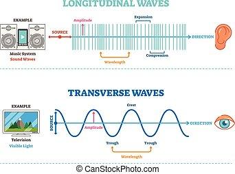 tipo, diagram., longitudinal, científico, sonic, ilustração, onda, principle., visual, vetorial, percepção, transversal
