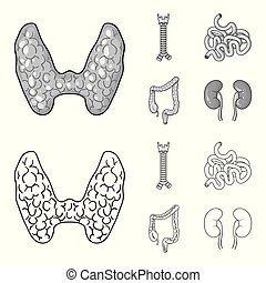 tiróide, intestino, estilo, intestine., glândula, ícones, símbolo, web., espinha, cobrança, grande, jogo, vetorial, ilustração, human, pequeno, esboço, órgãos, estoque