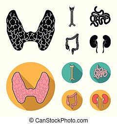 tiróide, intestino, estilo, intestine., jogo, glândula, ícones, símbolo, web., espinha, cobrança, grande, vetorial, apartamento, ilustração, human, pequeno, pretas, órgãos, estoque