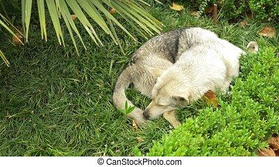 Tired abandoned dog sleep lying on green grass, adorable...