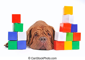 Tired dog and cube brick towers