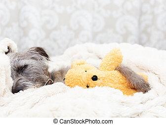 Tired Dog Sleeping With Teddy Bear