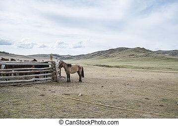 tired donkey near corral with horses