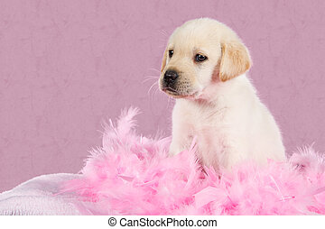 Tired labrador puppy sit on pink feathers pattern background...