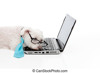 Tired or overworked dog sleeping at computer laptop - A...