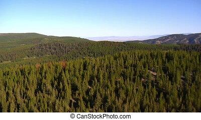 tiro aéreo, de, floresta, e, montanhas, com, árvores mortas