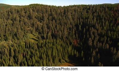 tiro aéreo, de, floresta, e, montanhas