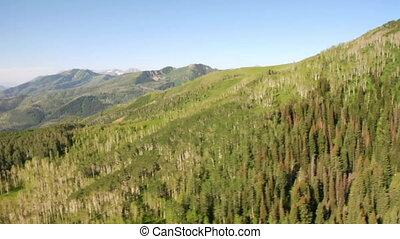 tiro aéreo, de, floresta verde, e, montanhas, e, prado