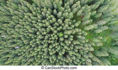 tiro aéreo, de, floresta verde