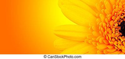tiro, flor, macro, foco, detalle, profundidad, plano de fondo, bajo, mancha, gerber, brillante