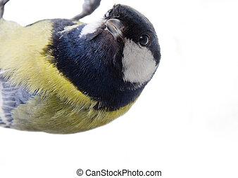 tit bird 2