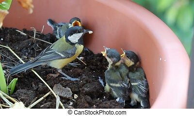 Tit bird feeding young animals