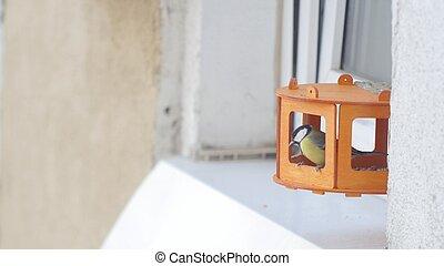 Tit bird Parus major pecking seeds in the bird feeder