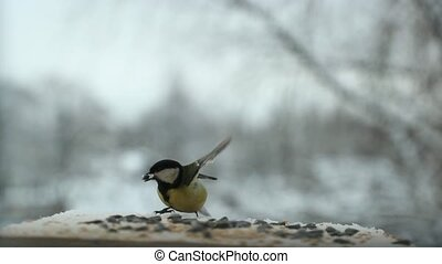 Tit bird Parus major pecks seeds in the bird feeder in...
