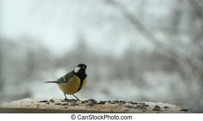 Tit bird Parus major pecks seeds in the bird feeder in winter. Slow motion video
