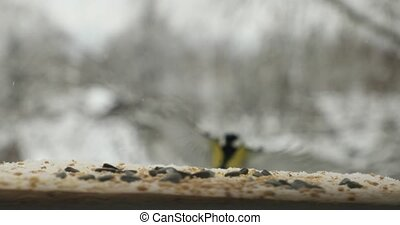 Tit bird Parus major pecks seeds in the bird feeder in winter