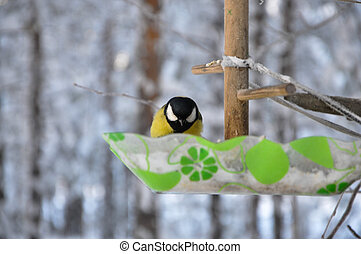 tit bird sitting on a branch, winter landscape