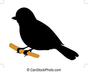 tit bird - silhouette of tit bird