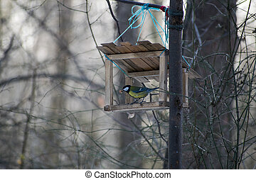Tit in the wooden bird feeder in the park in winter. Cute titmouse in the bird feeder