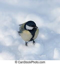 tit in winter