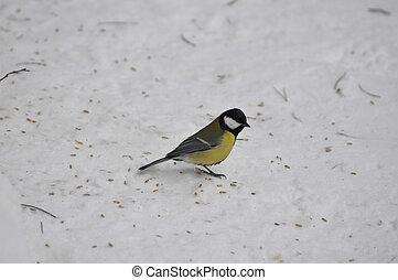 tit on a snow in winter