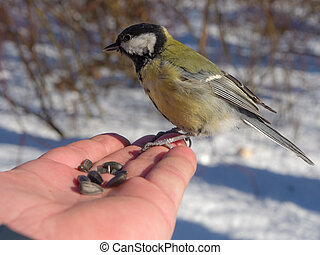 tit on the palm