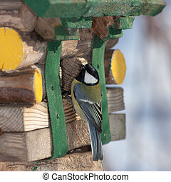 tit on the wooden house