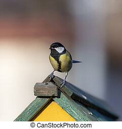 tit sitting on the roof