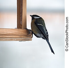 Tit with green plumage is sitting at the feeder