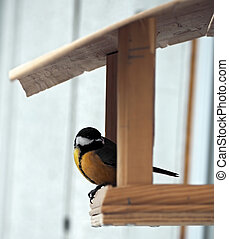 Tit with yellow plumage is sitting at the feeder
