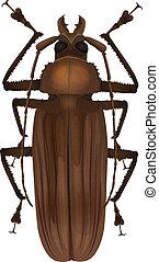 Titan beetle - Titanus giganteus - Illustration of a Titan...