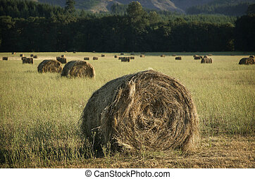 Title Caption agricultural field with rolled stacks of hay...