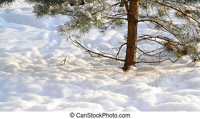 titmice on snow under a tree - A titmice on the snow under a...
