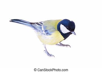 titmouse, 鳥, 隔離された, 白