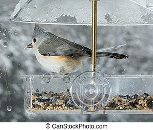 titmouse, alimentador, pájaro, ventana, copetudo