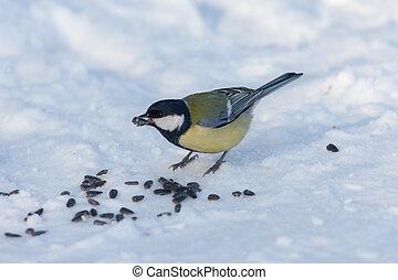 titmouse eats sunflower seeds