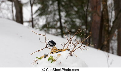 Titmouse feeder in the forest - Birds eating seeds from the...
