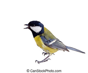 titmouse in a rush 2