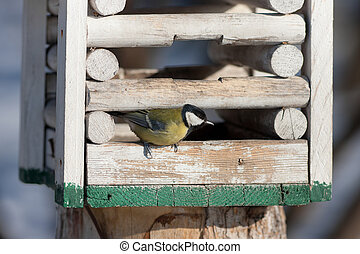 Titmouse in a wooden feeding