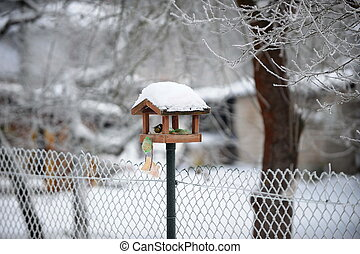 titmouse in bird feeder