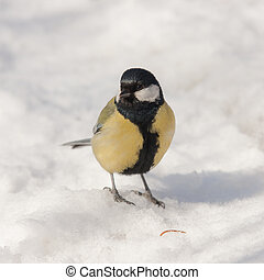 titmouse in winter day