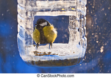 Titmouse in winter