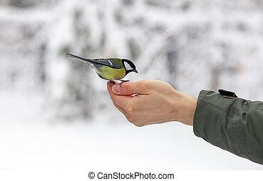 titmouse, mad, håndflade, det æder, fugl