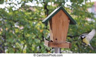 titmouse, nourrir oiseaux