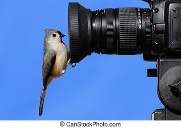 Titmouse On A Camera - Tufted Titmouse (Baeolophus bicolor) ...