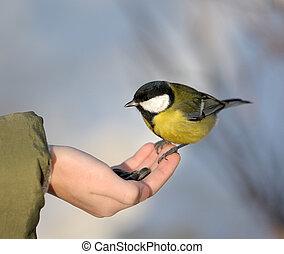 Titmouse on a hand.