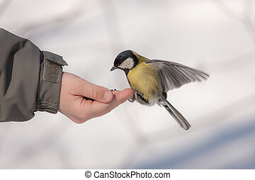 titmouse on a palm