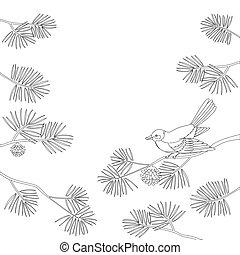 Titmouse on pine branch, contour