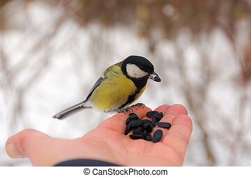 Titmouse on the palm