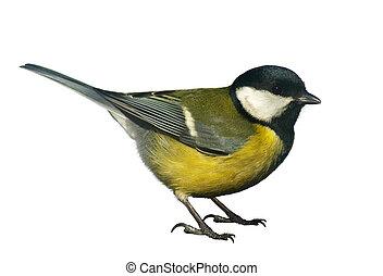 titmouse, pássaro, branca, isolado